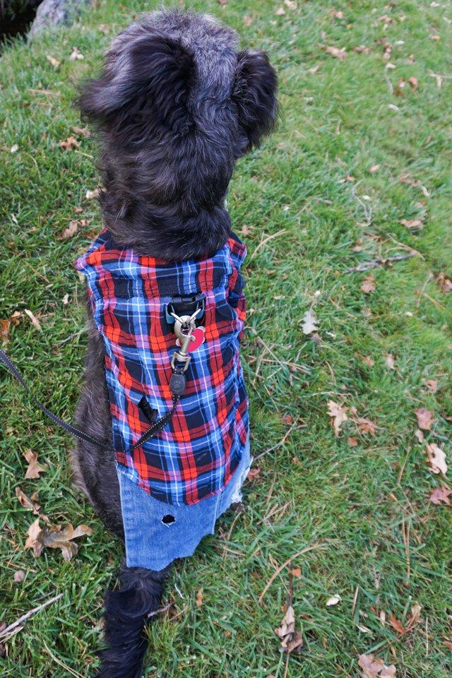 diy werewolf dog costume