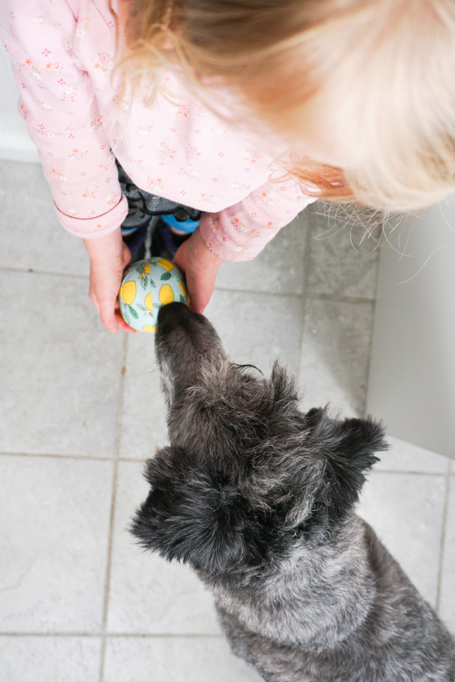 puppy and girl play with fabric ball